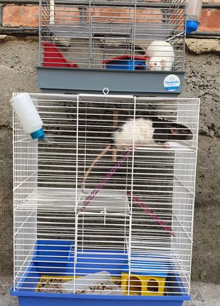 Клетки,  крысы Дамбо