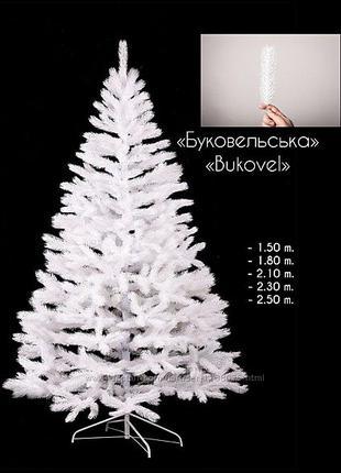 Елка Буковельская белая