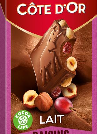 Cote D'or Chocolate цельным лесным орехом