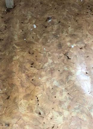 Профессиональное уничтожение насекомых Днепр