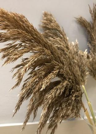 Пампасная трава Камыш Тростник Сухоцвет Свадьба Декор для дома