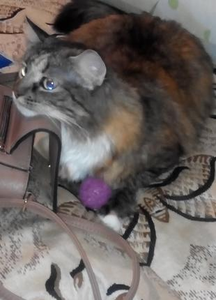 Кошка(5лет)