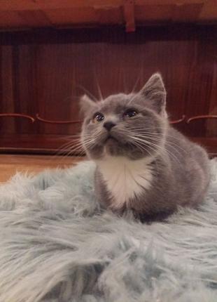 Котенок Нора.