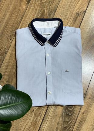Рубашка хлопковая lacoste оригинал