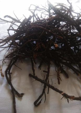 Пятипал корінь