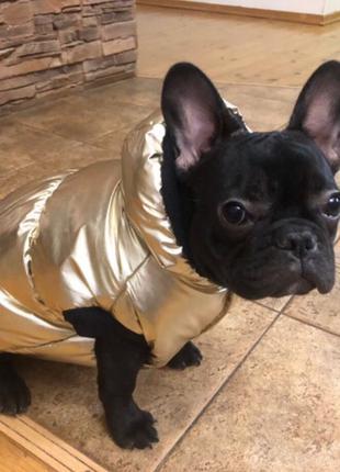 Одежда для собак золотой жилет