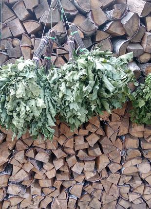 Берёзовые и дубовые веники для бани и сауны