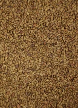 Семена магниченой люцерны.