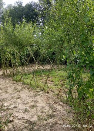 Беседка из ивы и изгородь (забор) живая
