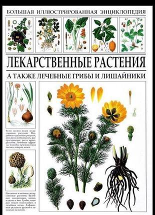 Большая энциклопедия. Лекарственные растения.