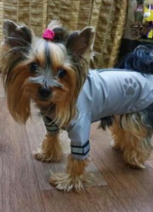 Одежда для самых преданных и любимых собачек.