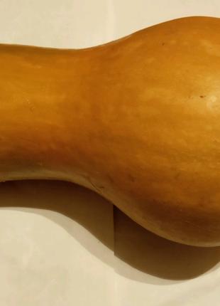 Тыква оранжевая (Кашник) семена по 15 шт