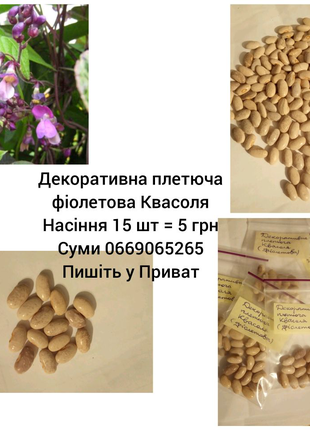 Декоративная вьющаяся фиолетовая фасоль семена по 15 шт