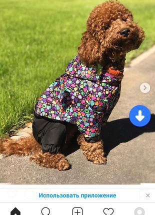 Одежда для собак дождевик сердечки