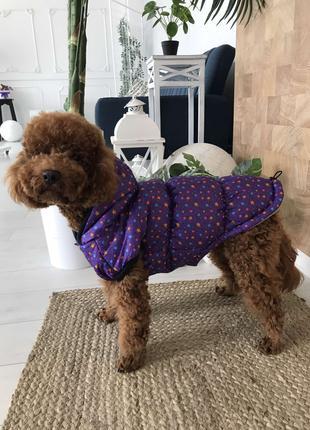Одежда для собак Жилет мелкие звезды