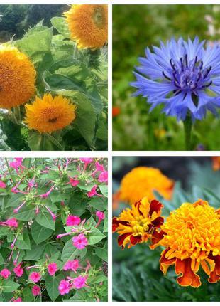 Цветы семена для сада