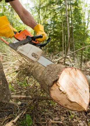 Спилить дерево. Удалить аварийное дерево. Выкорчевать пень