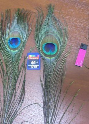 Перья павлина, медальон, хвост, глазки, перо