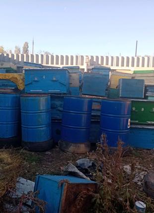 Пчелиные улья и рамки