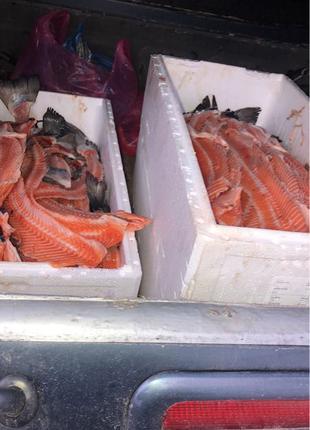 морская рыба для животных