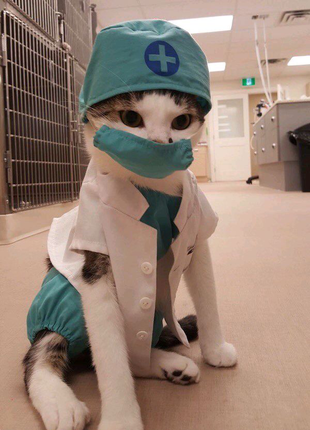 Помогу с учёбой в сфере ветеринарии