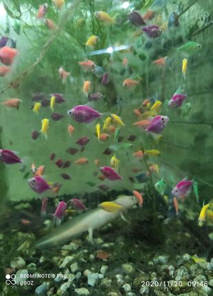 Аквариумные рыбки, черепашки, аксолотли, корма и многое другое