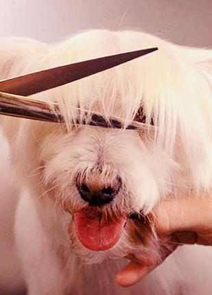 Груминг стрижка собак грумер с выездом на дом