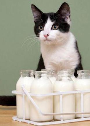 Домашнее козье молоко и сыр от англо-нубийских коз.