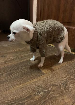 Одежда для собак / одежда на собаку / свитер для собаки