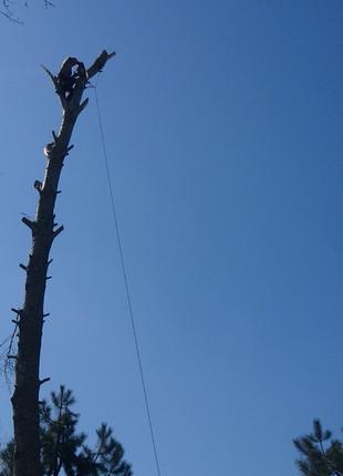 Спил, обрезка деревьев верхолазами