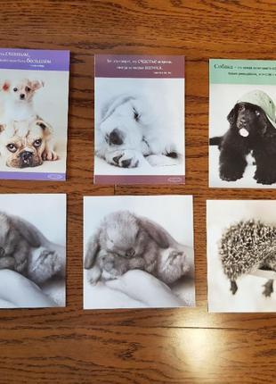 Открытки поздравительные с животными (собаки, ежик, кролик)