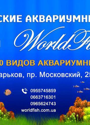 Экзотические рыбки в Харькове, более 70 видов, аквариумы