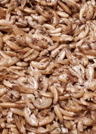 Гаммарус корм для рыбок,черепах,птиц