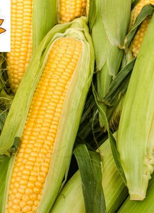 Високоурожайний гібрид кукурудзи Яніс