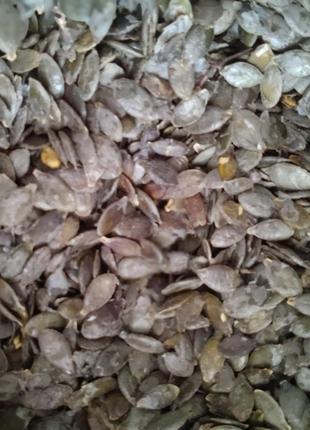 Семечка голосемянной тыквы