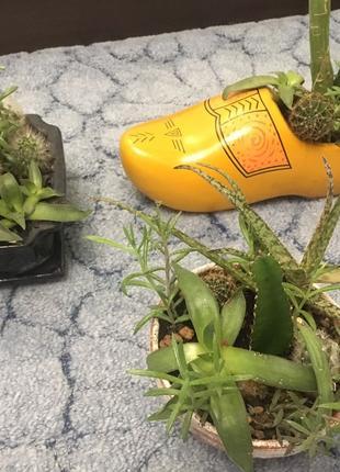 Набор кактусов + суккулентов