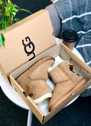 Женские зимние ботинки ugg 🔥Натуральная замша, зима