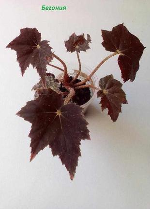 Укорененные комнатные растения