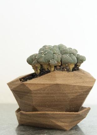 Ємність для рослин