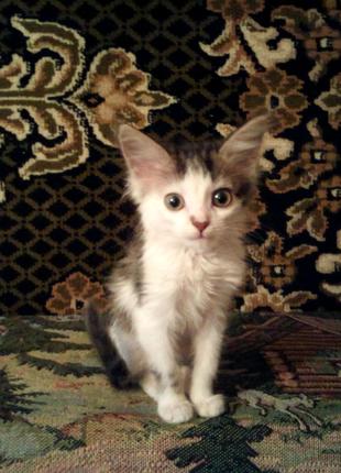 Котенок (кошечка) в надежные, хорошие, добрые руки.