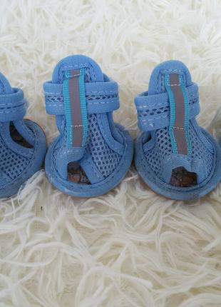 Обувь для маленьких пород собак