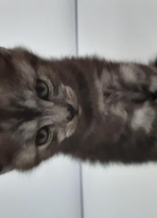 Кошка (2 месяца)