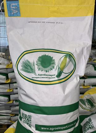 Семена кукурузы Оржица 237 МВ (ФАО 230). Урожай 2020г.