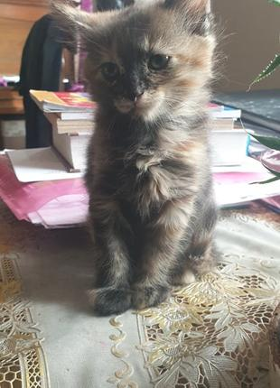 Гарні кошенята шукають чуйних та добрих господарів