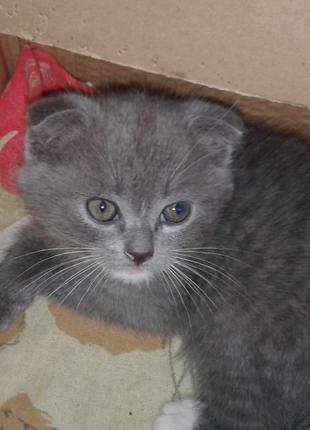 Продаю миле кошенятко