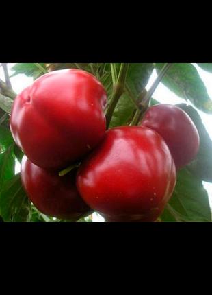 Перец Колобок (семена 25 шт.)