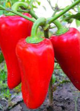 Перец Подарок Молдовы (семена 25 шт)