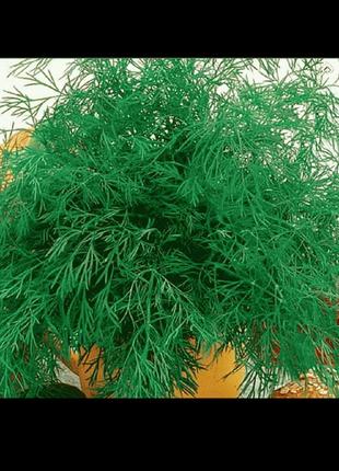 Укроп Ортодокс (семена 2г)