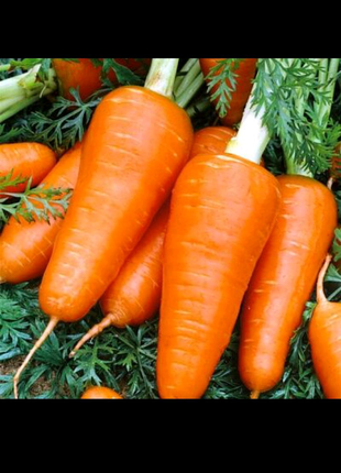 Морковь Шантане Ред Кор (семена 1г)