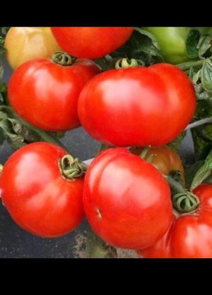 Томат Волгоградский (семена 20 шт)